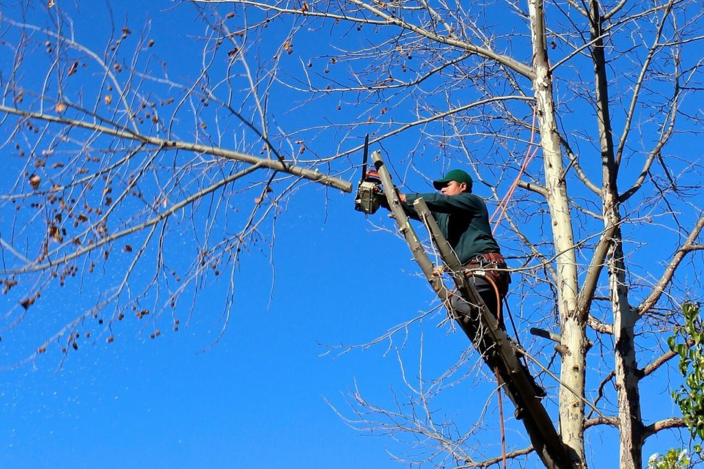 Contact Us-Lexington Tree Trimming and Stump Grinding Services-We Offer Tree Trimming Services, Tree Removal, Tree Pruning, Tree Cutting, Residential and Commercial Tree Trimming Services, Storm Damage, Emergency Tree Removal, Land Clearing, Tree Companies, Tree Care Service, Stump Grinding, and we're the Best Tree Trimming Company Near You Guaranteed!