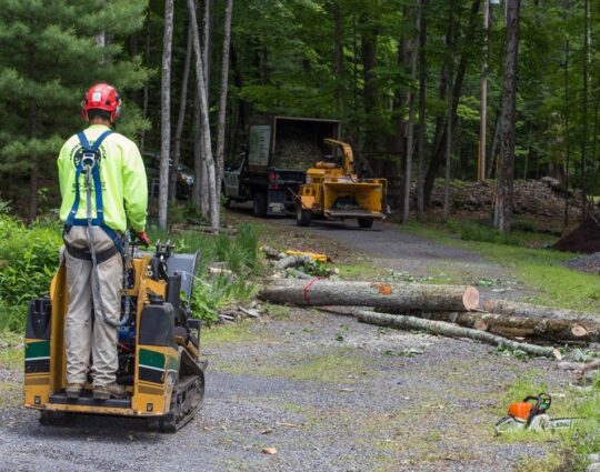 Emergency Tree Removal-Lexington Tree Trimming and Stump Grinding Services-We Offer Tree Trimming Services, Tree Removal, Tree Pruning, Tree Cutting, Residential and Commercial Tree Trimming Services, Storm Damage, Emergency Tree Removal, Land Clearing, Tree Companies, Tree Care Service, Stump Grinding, and we're the Best Tree Trimming Company Near You Guaranteed!