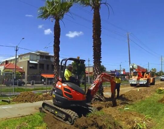 Palm Tree Removal-Lexington Tree Trimming and Stump Grinding Services-We Offer Tree Trimming Services, Tree Removal, Tree Pruning, Tree Cutting, Residential and Commercial Tree Trimming Services, Storm Damage, Emergency Tree Removal, Land Clearing, Tree Companies, Tree Care Service, Stump Grinding, and we're the Best Tree Trimming Company Near You Guaranteed!