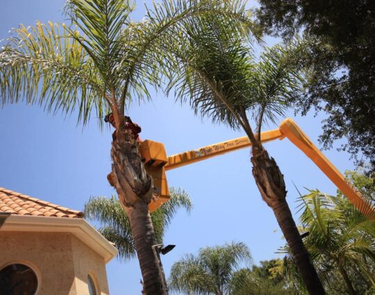 Palm Tree Trimming-Lexington Tree Trimming and Stump Grinding Services-We Offer Tree Trimming Services, Tree Removal, Tree Pruning, Tree Cutting, Residential and Commercial Tree Trimming Services, Storm Damage, Emergency Tree Removal, Land Clearing, Tree Companies, Tree Care Service, Stump Grinding, and we're the Best Tree Trimming Company Near You Guaranteed!
