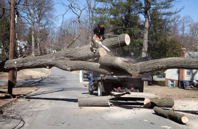 Residential Tree Services-Lexington Tree Trimming and Stump Grinding Services-We Offer Tree Trimming Services, Tree Removal, Tree Pruning, Tree Cutting, Residential and Commercial Tree Trimming Services, Storm Damage, Emergency Tree Removal, Land Clearing, Tree Companies, Tree Care Service, Stump Grinding, and we're the Best Tree Trimming Company Near You Guaranteed!