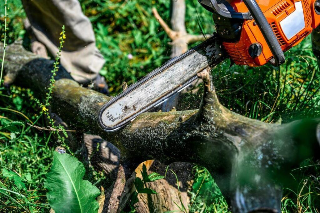 Services-Lexington Tree Trimming and Stump Grinding Services-We Offer Tree Trimming Services, Tree Removal, Tree Pruning, Tree Cutting, Residential and Commercial Tree Trimming Services, Storm Damage, Emergency Tree Removal, Land Clearing, Tree Companies, Tree Care Service, Stump Grinding, and we're the Best Tree Trimming Company Near You Guaranteed!