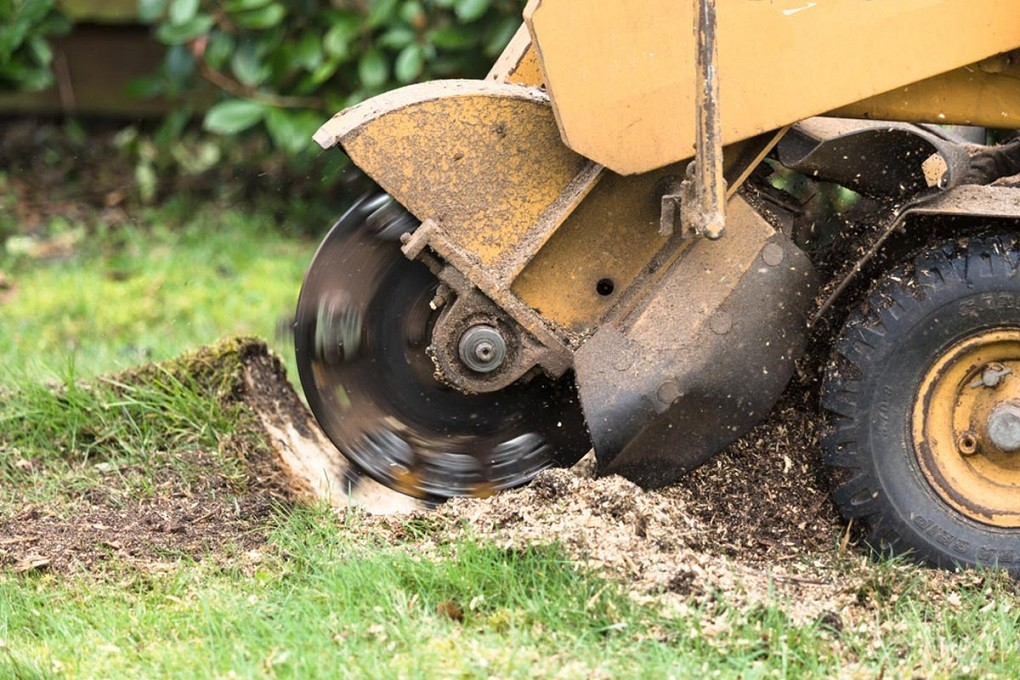 Stump Grinding-Lexington Tree Trimming and Stump Grinding Services-We Offer Tree Trimming Services, Tree Removal, Tree Pruning, Tree Cutting, Residential and Commercial Tree Trimming Services, Storm Damage, Emergency Tree Removal, Land Clearing, Tree Companies, Tree Care Service, Stump Grinding, and we're the Best Tree Trimming Company Near You Guaranteed!