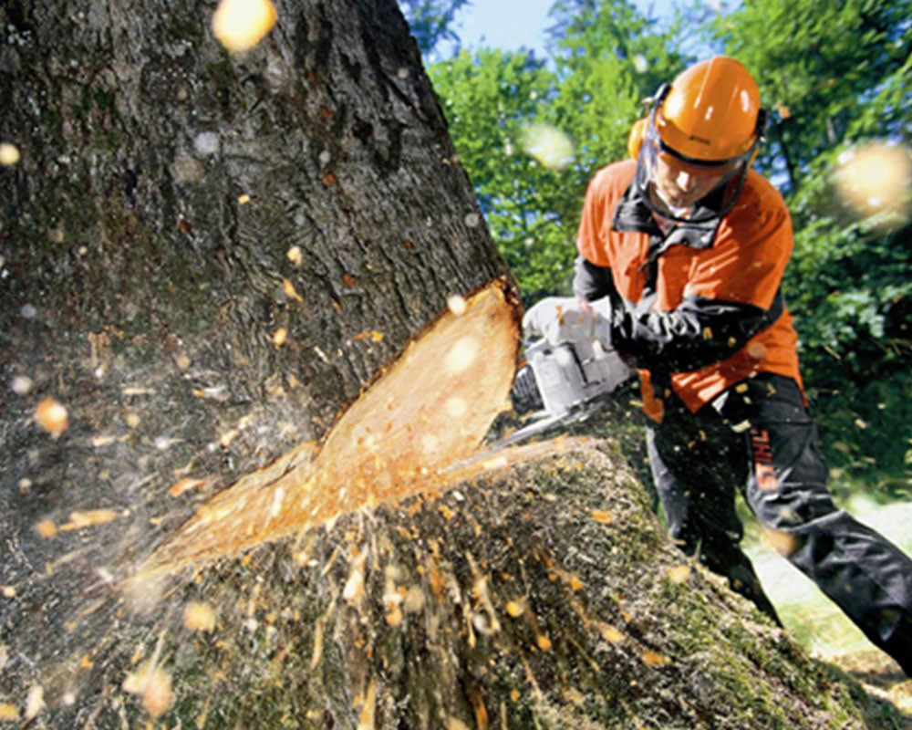 Tree Cutting-Lexington Tree Trimming and Stump Grinding Services-We Offer Tree Trimming Services, Tree Removal, Tree Pruning, Tree Cutting, Residential and Commercial Tree Trimming Services, Storm Damage, Emergency Tree Removal, Land Clearing, Tree Companies, Tree Care Service, Stump Grinding, and we're the Best Tree Trimming Company Near You Guaranteed!