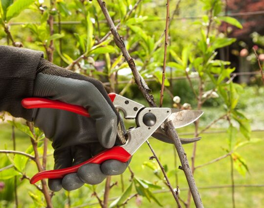 Tree Pruning-Lexington Tree Trimming and Stump Grinding Services-We Offer Tree Trimming Services, Tree Removal, Tree Pruning, Tree Cutting, Residential and Commercial Tree Trimming Services, Storm Damage, Emergency Tree Removal, Land Clearing, Tree Companies, Tree Care Service, Stump Grinding, and we're the Best Tree Trimming Company Near You Guaranteed!