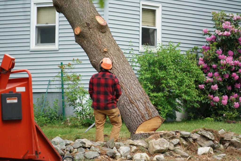 Tree Removal-Lexington Tree Trimming and Stump Grinding Services-We Offer Tree Trimming Services, Tree Removal, Tree Pruning, Tree Cutting, Residential and Commercial Tree Trimming Services, Storm Damage, Emergency Tree Removal, Land Clearing, Tree Companies, Tree Care Service, Stump Grinding, and we're the Best Tree Trimming Company Near You Guaranteed!